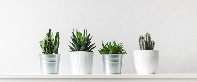 Minimalismus Töpfe Pflanzen