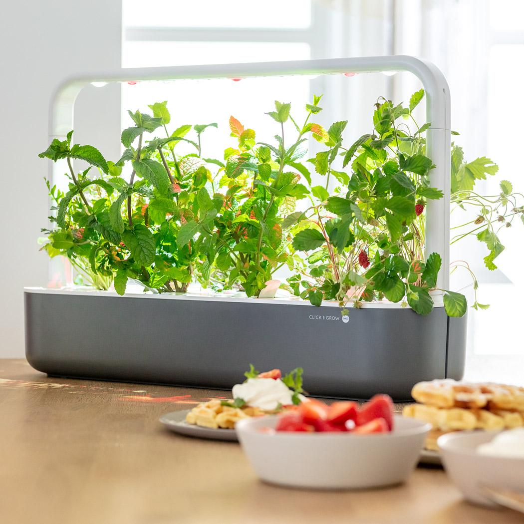 Kochen mit Kindern Smart Garden