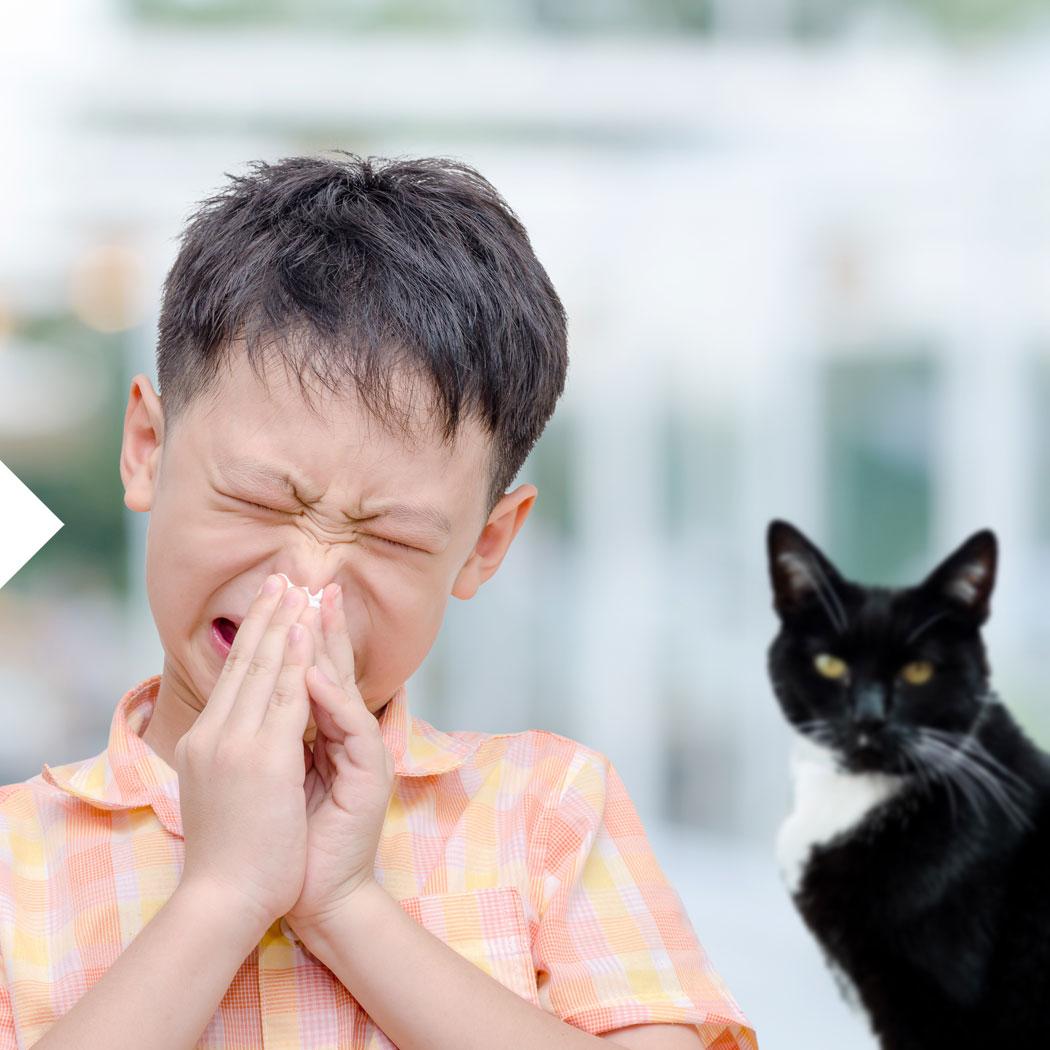 Allergie, Tierhaar