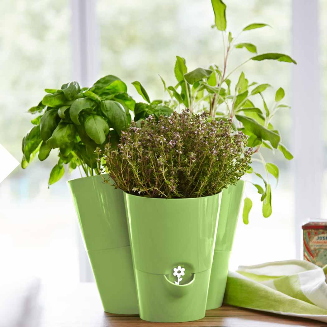 Salat und frische Kräuter