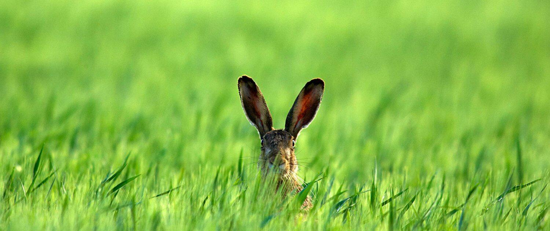 Osterbrunch Osterfest Ostern Hase