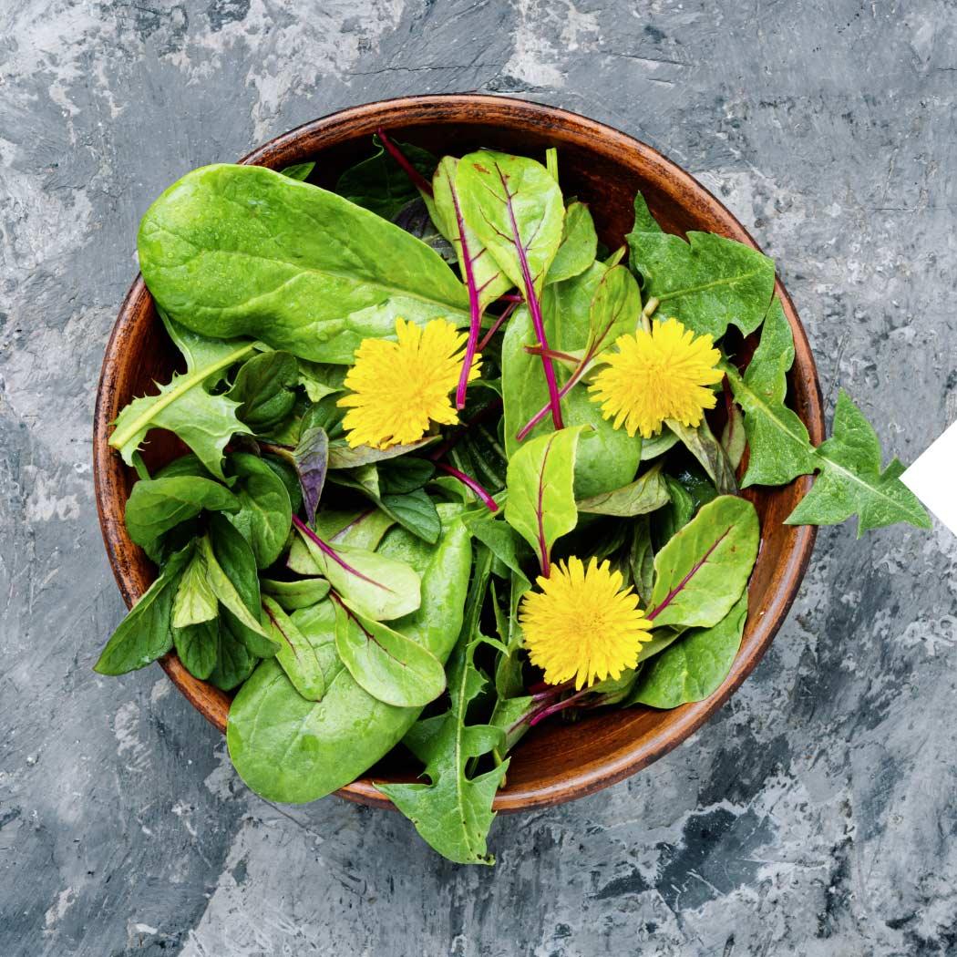 Spinat Löwenzahn Saisonal April Salat